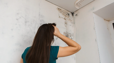 How to Get Rid of Mold Smell