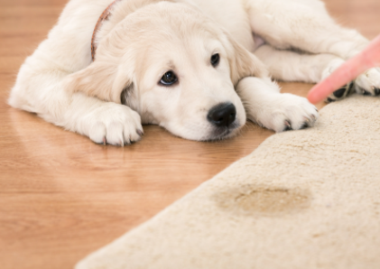 How to Clean Pet Urine from Carpet